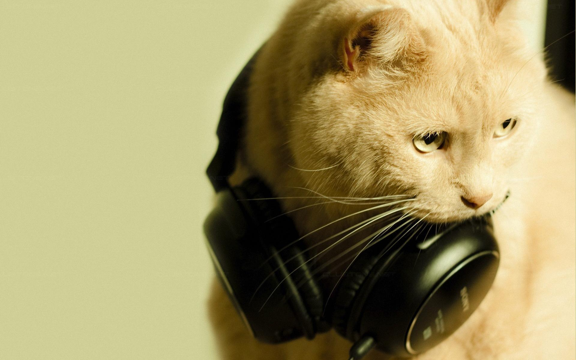 Animals___Cats_Red_Cat_music_fan_044681_