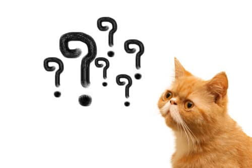 cats have questions